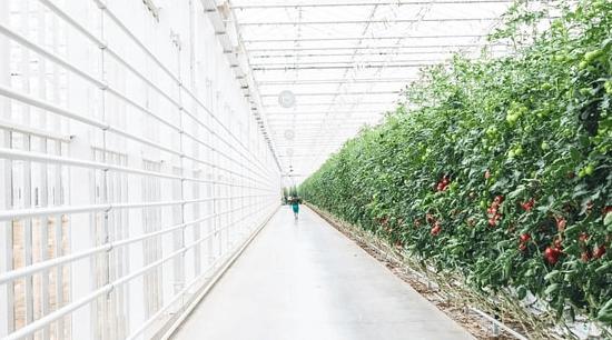 13 maart Tuinbouw Energiedag 2020